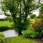 bomen tuin